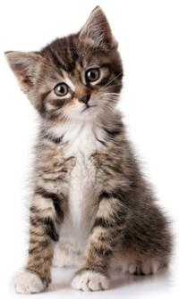 Konzervy pro koťata