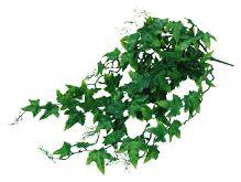 Lucky Reptile Ivy Bush cca 50cm
