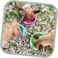 Miska pro psa, cestovní, BecoBowl Travel-green M, EKO
