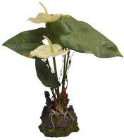 Lucky Reptile Anthurium - bílé cca 25cm