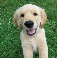 Jak přivítat nového psa do vašeho domova?