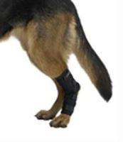 Chránič kolena pro psa KRUUSE Rehab XS-XXL sada 12ks KRUUSE