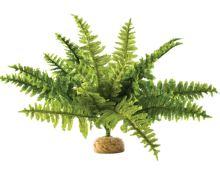 Rostlina EXO TERRA Boston Fern střední 29cm
