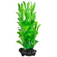 Rostlina TETRA Hygrophila S