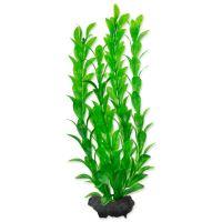 Rostlina TETRA Hygrophila M