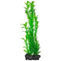 Rostlina TETRA Hygrophila L