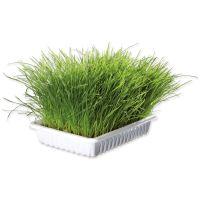 Miska TRIXIE s trávou pro kočky 100g